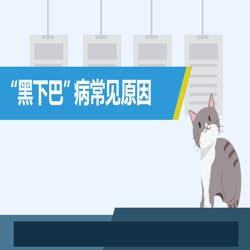 """农博士微课堂   第七期:你的猫咪出现""""黑下巴""""那可能是病"""